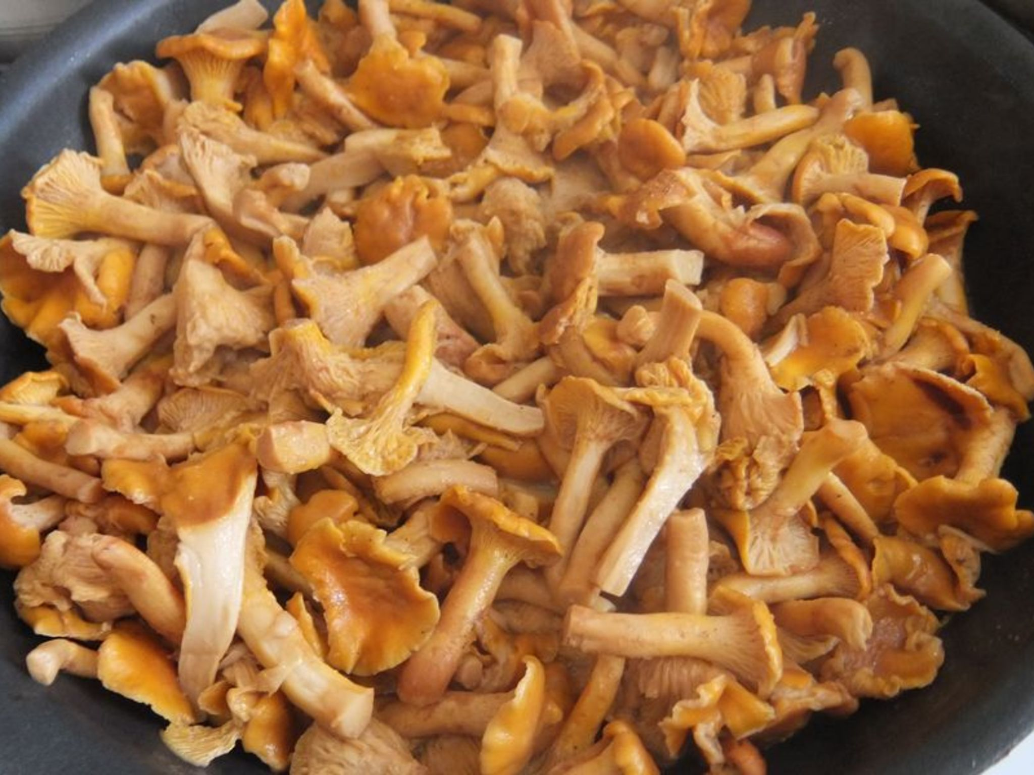 Грибы рецепты лисички